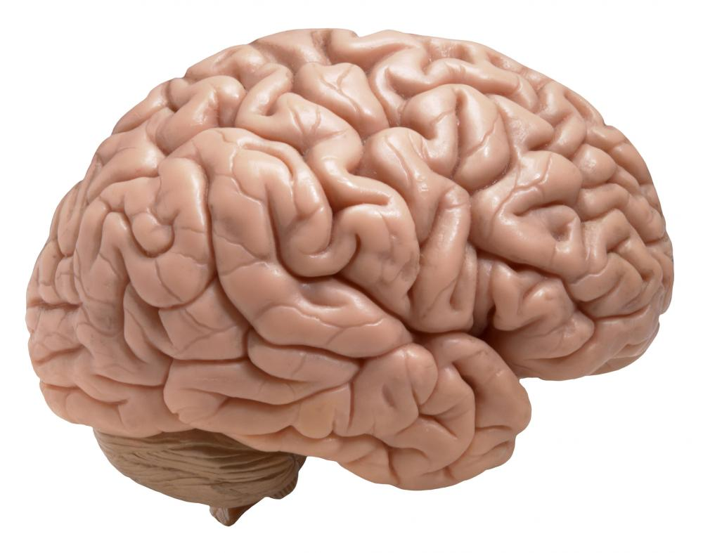 Brain Clutter Makes Older Adults Doubt Memories Into The Void Science